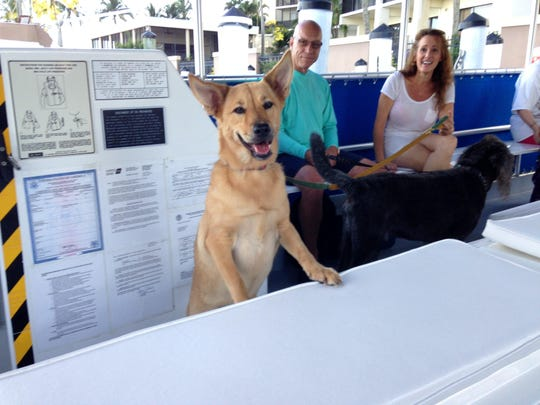Pure Florida is bringing back Bark on the Ark for pooches and their people on Saturday.