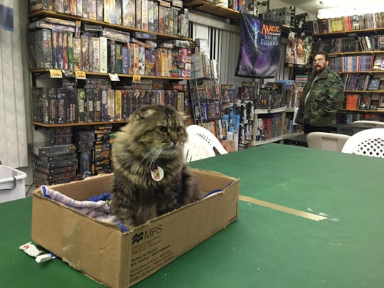 Flights of Fantasy in Colonie features an array of science fiction and fantasy books, as well as tabletop and card games — and a friendly cat named Bob Too.
