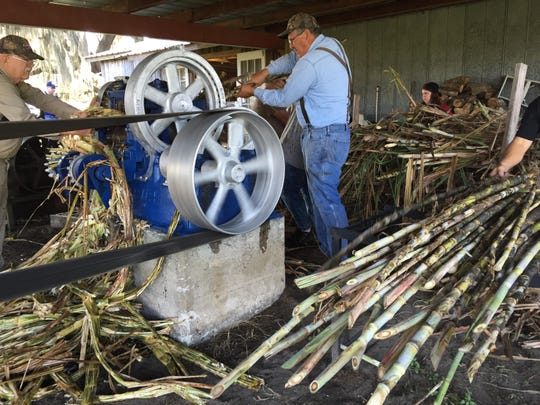 Lengthy sugar cane stalks, stripped of outer leaves, are put into turning rollers. The rollers crush and squeeze the stalks, extracting juice that flows into a separate bin, producing a 60-gallon batch of juice. The used flat stalks are then heaped in a pile for cattle feed.