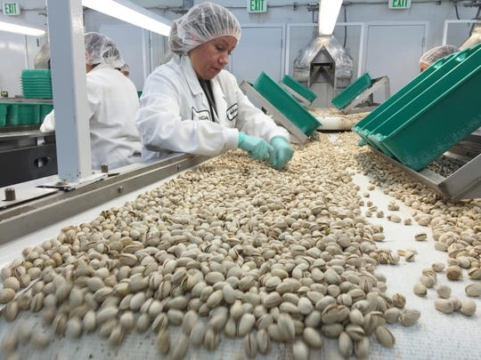 A worker at Horizon Nut Co., north of Tulare, remove damaged and discolored pistachios on a conveyer belt before they go to their final processing.
