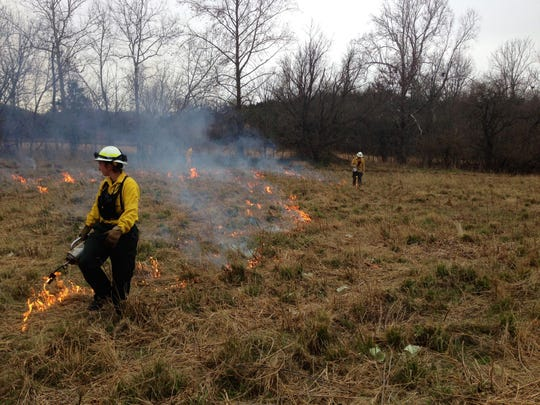 State forester Patti Nylander led a burn of tall grasses in the meadow down by the river.