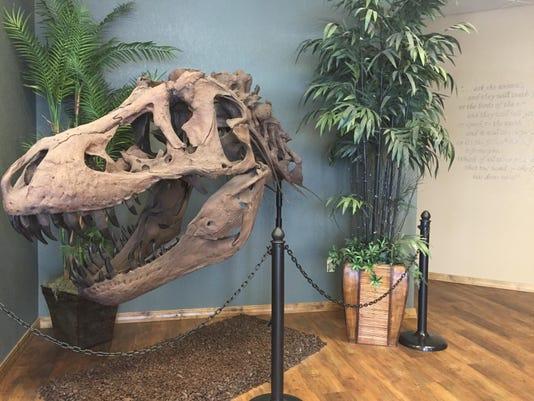 Skull FAL 0424 Glendive Creationism museum