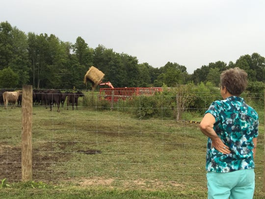 Donna Sue Bowen watches as her brother, Tom Brown, feeds their cattle.