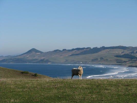 Travel New Zealand South Island (2)