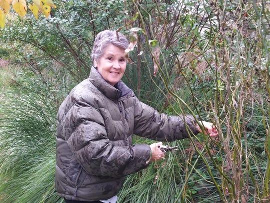 Flower arranger Theresa Clower cuts willow in her garden for a fall flower arrangement.