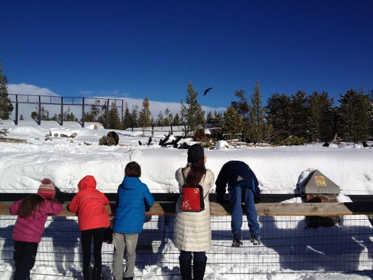 At the Grizzly and Wolf Discovery Center, kids watch bears rummage through the snow for food.