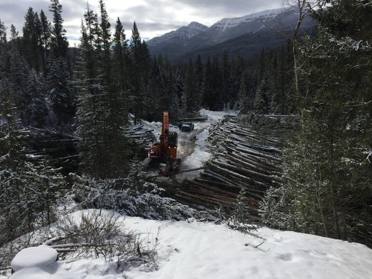 A dangle head processor cuts trees to length and strips the branches at the Benchmark logging project in the Rocky Mountain Ranger District in Helena-Lewis and Clark National Forest west of Augusta earlier this month, one of several logging projects occurring across the forest.