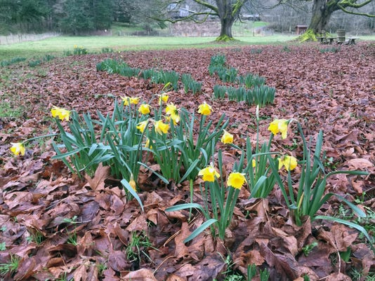 Gardening No Blooms (2)