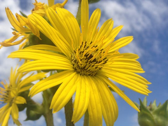 Heckrodt Nature Center in Menasha celebrates its Prairie Meadow Arboretum Trail with an all-out Prairie Hootenanny Saturday featuring wagon rides, local food, live music and tours of the beautiful prairie in full bloom.