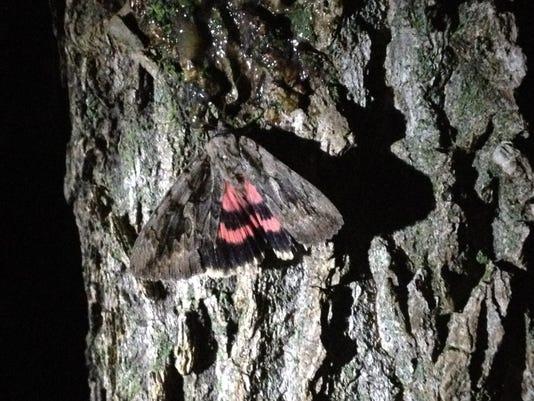 APC 082114 Yard MD BLOG Moths night out wrapup.JPG