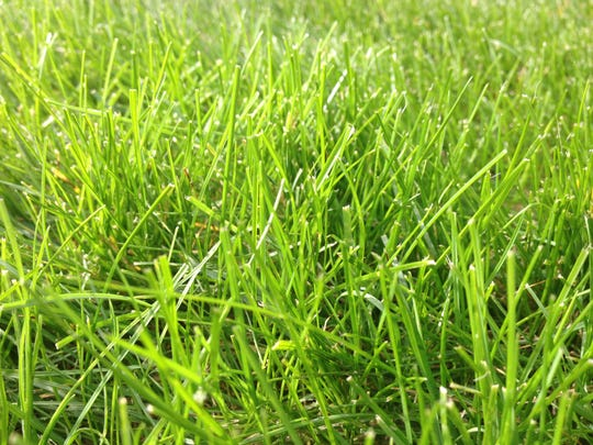 Fall is the best time of year to apply broadleaf weed herbicides and aerate the lawn.