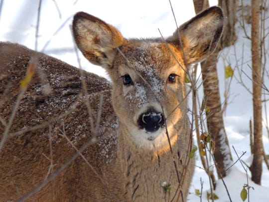 Rob Zimmer's Wildlife in Winter series kicks off this week. Find out all about winter wildife, as well as some of the best places to see and enjoy the wonders of the season.