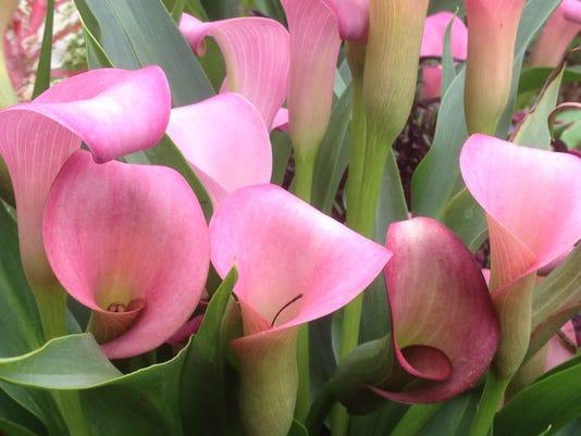 APC yard md valentine garden 3.JPG