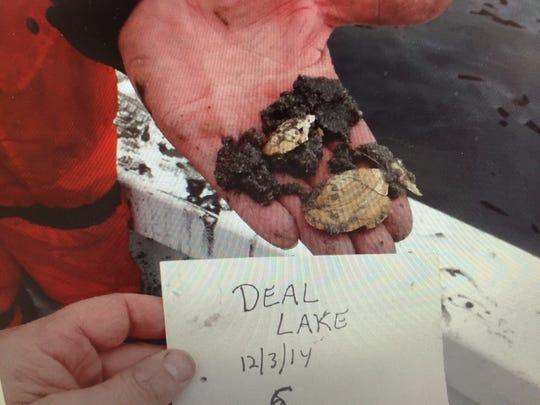 Researchers uncovered an abundance of fossilized mollusks while testing the bottom of Deal Lake.