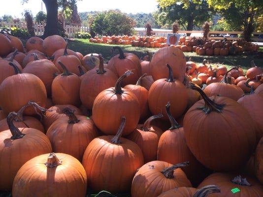 -ITHBrd_09-30-2014_Daily_1_A005~~2014~09~29~IMG_pumpkins_1_1_7O8L910S_L49117.jpg