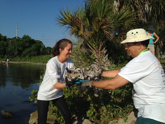(from right) Phil Stasik, president of the Space Coast Progressive Alliance, hands a bag of oyster shells to Sammy Anderson, who coordinates Brevard Zoo's oyster restoration efforts. Volunteers and Brevard Couty and zoo officials set out oyster shells Friday to create a pilot oyster restoration reef at Nicol Park. Next, they will add oysters that volunteers grew at their docks. Oysters can filter up to 50 gallons per day.