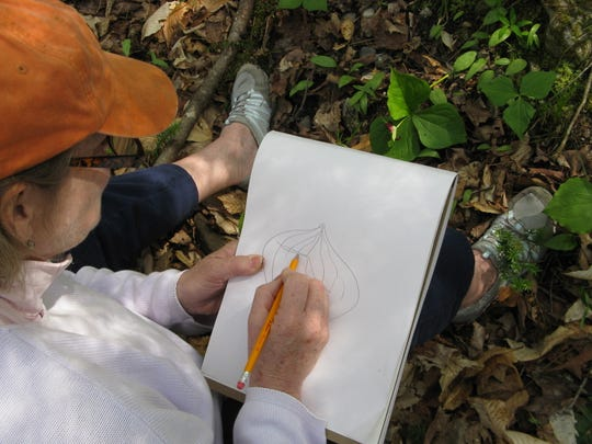 Take time to study the things you see in the woods and draw the details. The first markings can be preliminary, to inspire a more careful effort later.