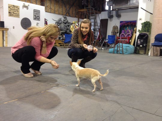 """Legally Blonde"" stars Hannah Marshall, left, and Keely Agan interact with the Bruno during an audition Saturday morning at Lyric Warehouse in South Burlington."