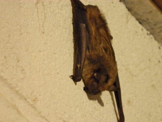 Rabid Bat 001.JPG