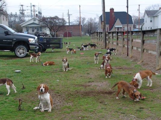 -cos 0412 beagle show 002.jpeg_20140804.jpg
