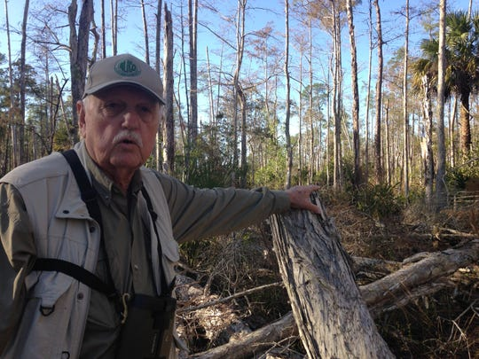 George Wheaton, chair of the Conservation 20/20 Citizens Land and Stewardship Advisory Committee, rests his hand on an invasive melaleuca tree at the Hidden Cypress Preserve in Bonita Springs. The 422-acre property was purchased by Lee County's Conservation 20/20 program in 2009.