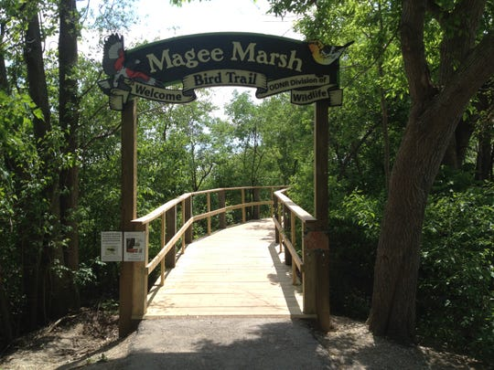 Birdwatching at Magee Marsh was one of the options for summer activities in Ottawa County.