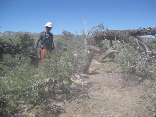 Jose Sarrano thins out Pinyon-Juniper vegetation encroaching on sage-grouse habitat in Lander County.