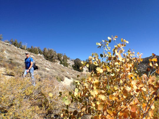 Hiking around Tamarack Peak near Mt. Rose Summit.