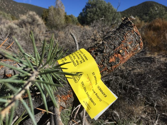 Be sure to get a permit before cutting a tree on public land. And don't forget to attach it to the tree once it is cut.