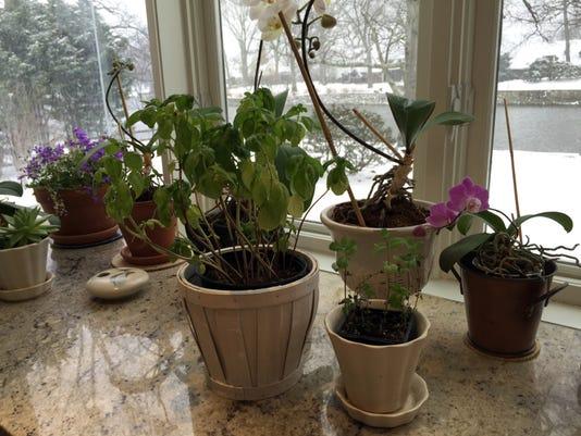 Gardening-Indoor Herbs