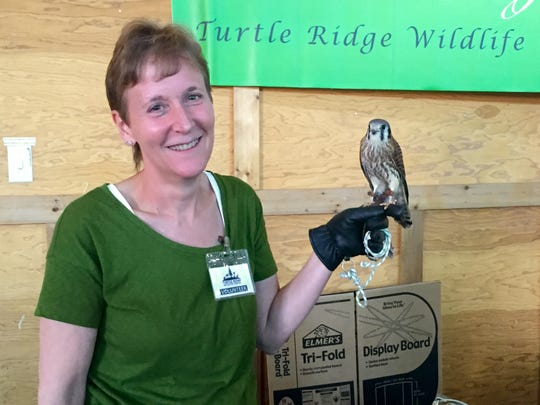 Jean Daugherty, education director for Turtle Ridge Wildlife Center, holds Cheyenne, an American kestrel, on Saturday at The Oregon Garden Earth Day fair.