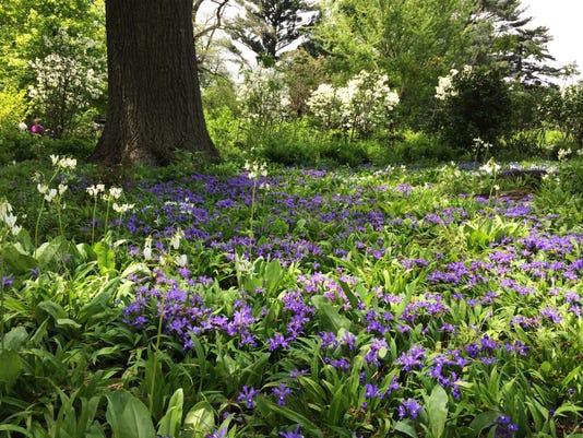 Gardening-Going Sustainable