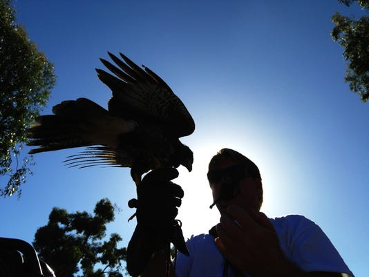 Calif  city turns to birds of prey to solve problems