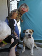As Carl Smith photographs a large dog, Sherry Dooley