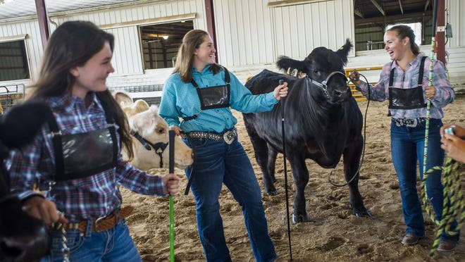 Isabelle Diehl, 14, center, chats with friends Chloe Nieto, right, and Grace Stern, left, as they get ready to show their animals in the Intermediate Beef Showmanship contest Tuesday morning at the Midland County Fairgrounds. Isabelle took first place in the category, while Grace took third and Chloe took fourth.