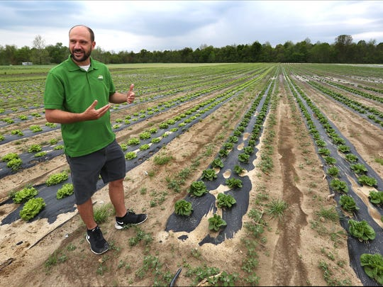 """Matt Ewer shows off his first spring crop, 4-inch-high lettuce, on the farm near Sheridan. """"This whole field out here is full of lettuce,"""" 150,000 head of it, Ewer says. """"Green leaf, romaine, kale."""""""