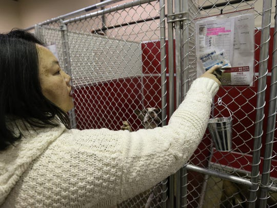 June Iv, director of programs and strategic partnerships for the Brandywine Valley SPCA, walks through the dog kennels in the New Castle facility.