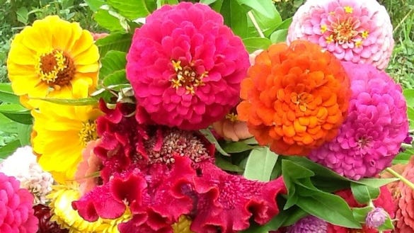 Urban Farm Share flowers
