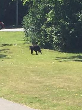 Two women say they spotted a bear near a Henrietta playground this morning.