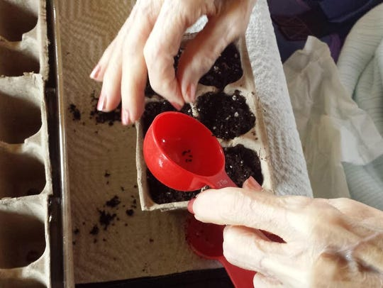 Horticultural therapy is a vehicle to meet wide-ranging