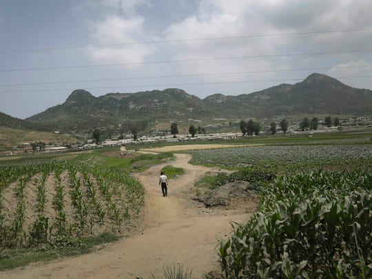 A man walks on a dirt path between cornfields on June