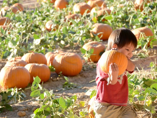 10/1-11/2: Schnepf Farms Pumpkin and Chili Party
