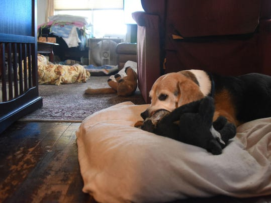 These old dogs are special picks at sanctuary
