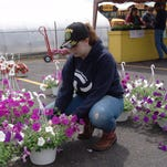 Emily Barnett helps out at the FFA plant sale during the Black Bear Fest.