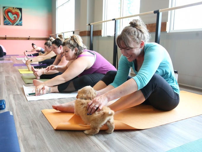 Scenes from a puppy yoga class held at Roc & Soul Fitness