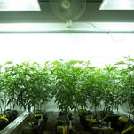 A dispute over drug felons in Colorado's marijuana industry is heating up at the Statehouse.