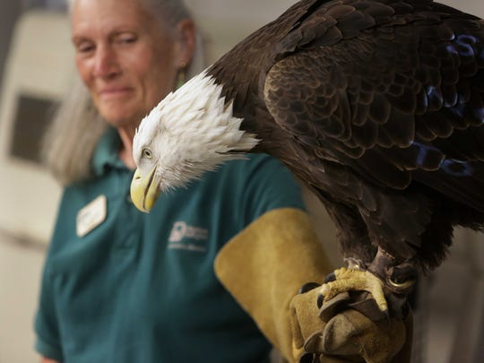 Phoenix the Eagle from the Dickerson Park Zoo visits the Healing Path Class. Jan Carter, a volunteer from the zoo, holds her.