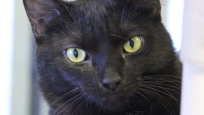 Nile River is waiting for his new family at the Oshkosh Area Humane Society.