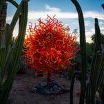 Desert Botanical Garden in Phoenix–
