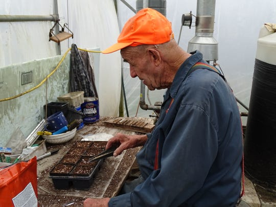 George Dabrunz, 88, plants cilantro seeds at Schmittuz Gardens.